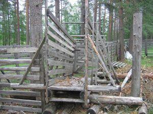 Reindeer fences SeppVei wikimedia public domain