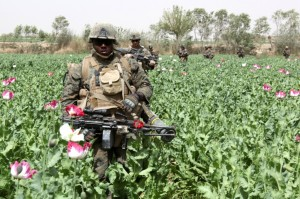 US Marines patrolling poppy fields in Helmand Province DOD