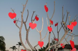 Valentine's Day Tree Johntex wikimedia
