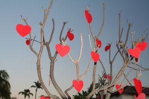 Valentine's Day Tree Johntex wikimedia