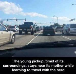 Baby Truck Meme
